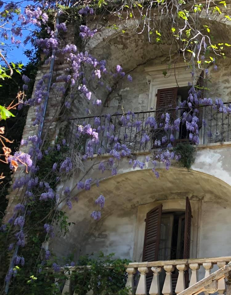 The back of the Ricci Palace with wisteria.